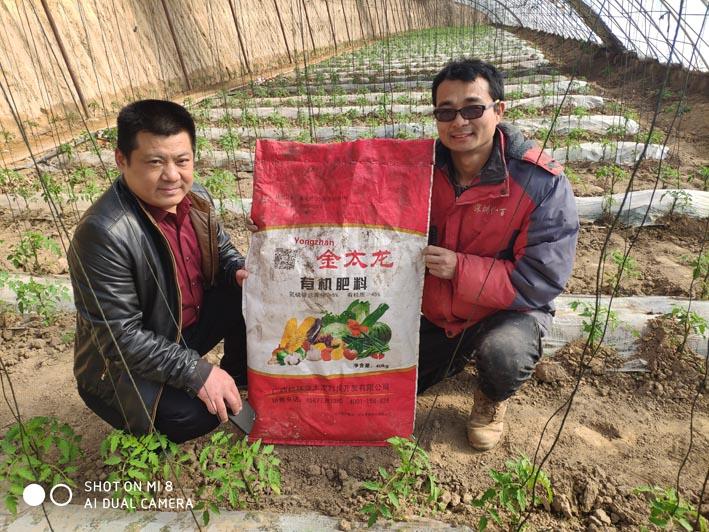 金太龙蔬菜生态种植出效益