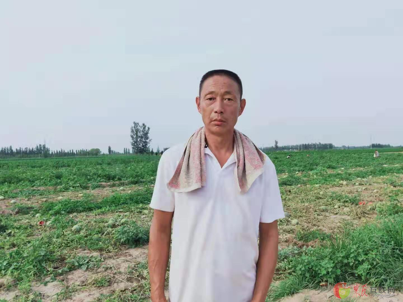 文安县46亩西瓜3毛钱1斤大甩卖啦