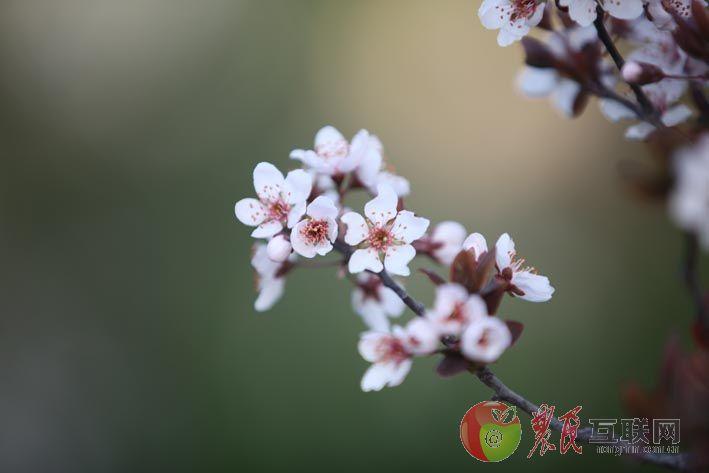 孟燕君镜头里的春暖花开