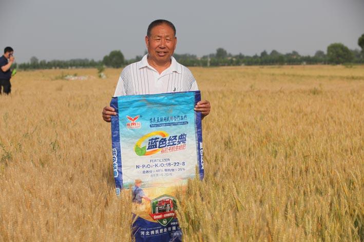 成安种植户连续四年见证小麦玉米