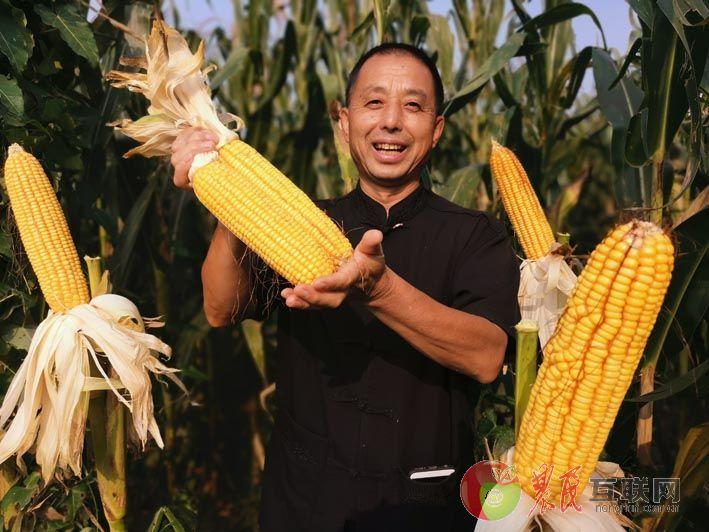拥民玉米丰收季 清苑粮农来报喜