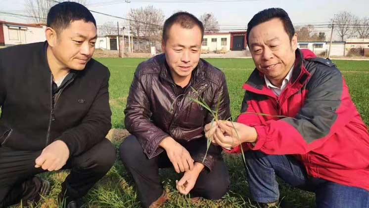 2021年冬小麦抗旱保苗技术意见