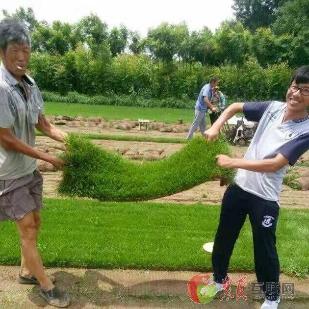 求购草坪种籽