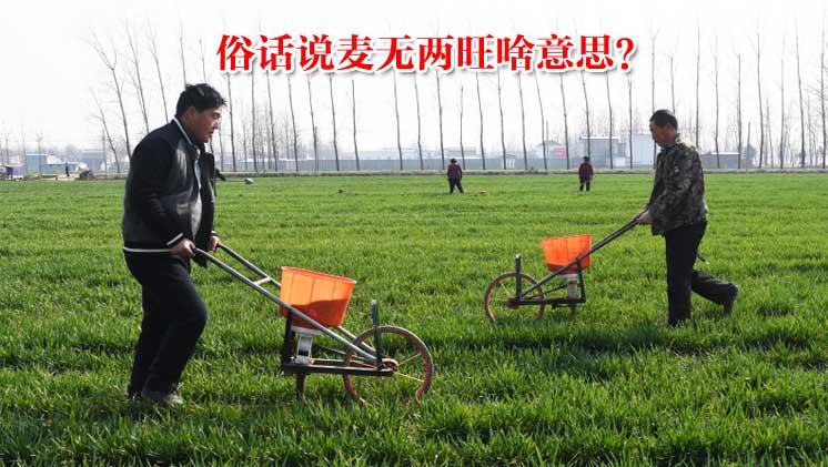 """农村俗语:""""麦无二旺,冬旺春不旺"""