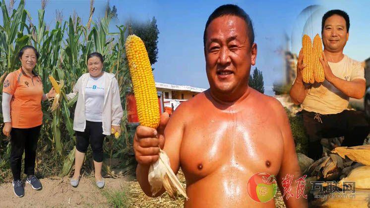 玉米说:连续两年做对照 乡亲都夸